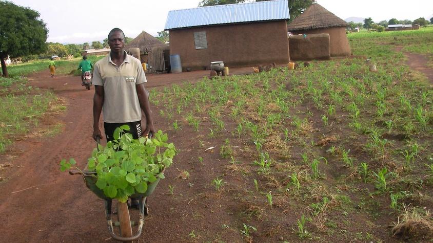 Formation de 2 personnes en agroforesterie