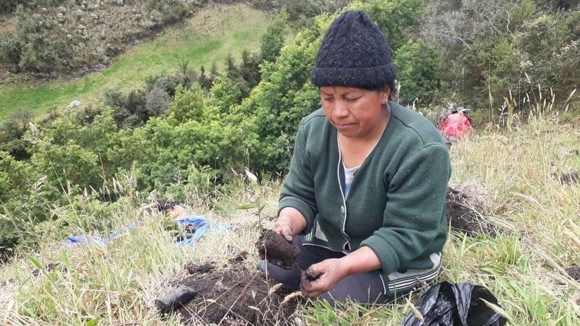Création d'une pépinière en Colombie